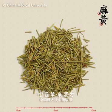 草麻黄  ephedra sinica
